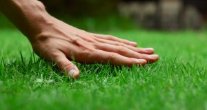 A Few Tips In Selecting A Lawn Treatment Company