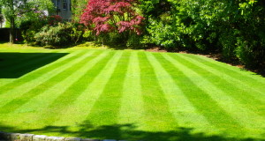 Lawn Treatment – Tips on the How to Care For Your Lawn