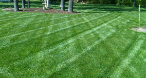Lawn Service Prices – What's Included