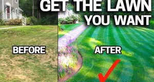 How to FIX an UGLY Lawn with RESULTS – Step by Step for Beginners EASY
