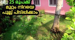 25 രൂപക്ക് മുറ്റം നിറയെ പുല്ല് പിടിപ്പിക്കാം Lawn making Gardening | low cost