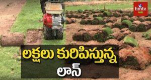Lawn Grass Growing | Lawn Grass Cultivation Techniques | hmtv Agri