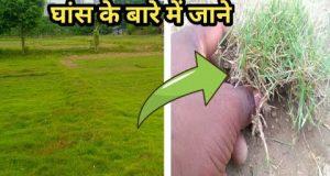 अपने गार्डन में कौन सी घास लगाऐ || How to grow lawn grass with garden Hindi