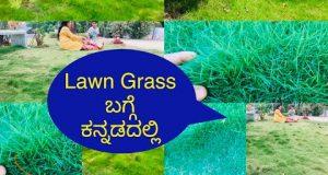 ಮನೆ ಮುಂದೆ ಚಿಕ್ಕದಾದ Lawn Grass garden ಮಾಡುವುದಕ್ಕೆ ಕೆಲವು Tips