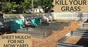 Kill Grass in Garden or for Lawn Conversion by Sheet Mulching Over Grass