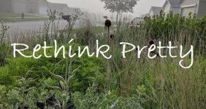 Rethink Pretty — Front Yard Lawn to Prairie Garden Conversion